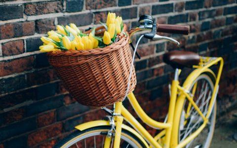 Voyage vélo-bateau dédié à la beauté des fleurs