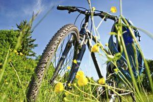 Vélo champ de fleurs