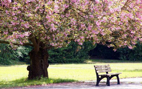 Comment gérer le décès, les funérailles et la succession d'une personne?