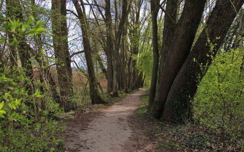 Marche dans les parcs - Mont Royal