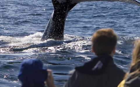 Charlevoix et les baleines