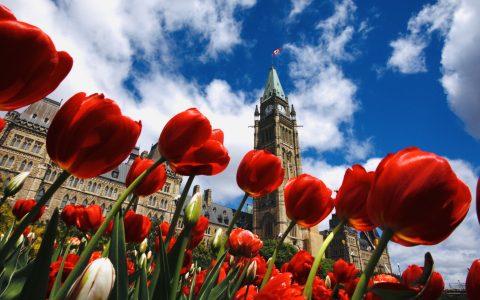 L'Outaouais, la capitale nationale et ses tulipes... à vélo