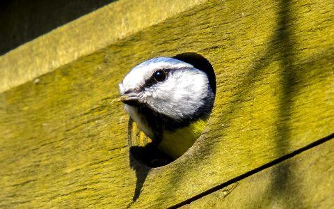 Atelier bricolage: fabrication d'un nichoir à oiseaux