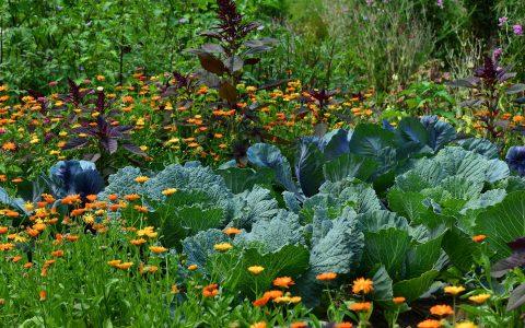 Petit guide du jardinage écologique