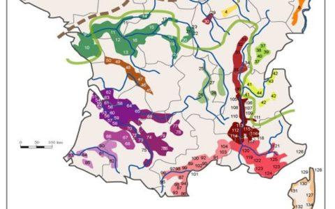 Exploration et dégustation des vins du monde: régions de la Provence et du Rhônes