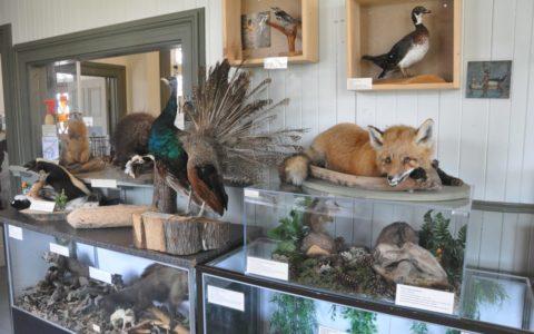 Marche en nature et visite du Centre zoom nature Desjardins